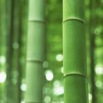 竹炭から竹酢液
